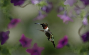 макро, птичка, птица, колибри, полет, цветы, размытость