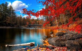 autumn, leaves, water, bridge