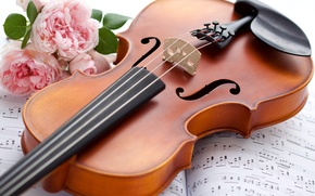 violin, musical instrument, Rose, Flowers, music