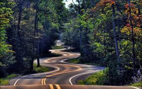 foresta, strada, Carica, natura, paesaggio