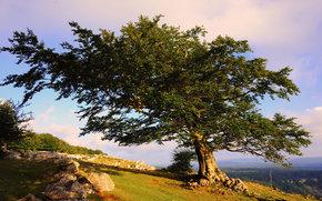 rvore, vero, natureza, paisagem
