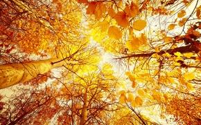 autunno, alberi, bottom-up, fogliame, Giallo, foresta, sole, cielo, paesaggio