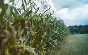 boy, summer, corn, mood