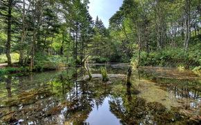 foresta, fiume, estate, natura