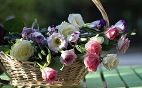 Roses, Eustoma, Buds, cestino, bordo