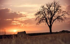 поле, жнивьё, дерево, закат