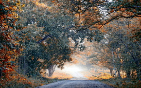 strada, alberi, paesaggio