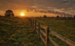 paddock, Cows, grass, tree, sun, Pipe, smoke