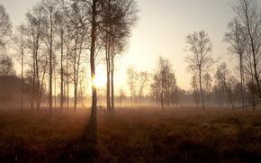alberi, nebbia, tramonto, paesaggio