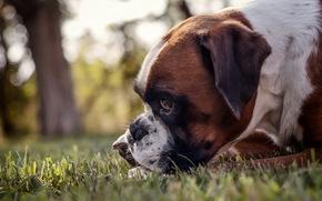 cane, vista, sfondo