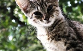 кошка, кот, полосатый, зелень, боке