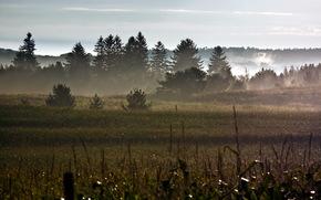 утро, поле, роса, природа, пейзаж