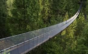 лес, мост, хвойный лес