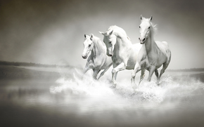 rzeka, ki, Konie, biega, woda