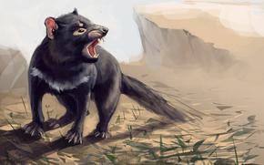 Art, Tasmanian Devil, Tasmanian devil, animal, jaws, grass