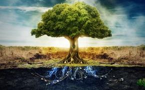 tree, underground, Electricity