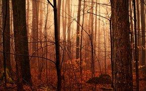 Autunno foresta, dopo la pioggia, umidit, gocce, Foschia, natura
