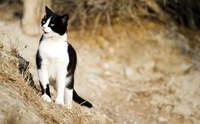 gatto, natura, sfondo