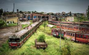 Built, train, metro, cars, railroad, thicket, abandonment