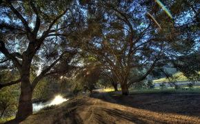 strada, fiume, alberi, paesaggio