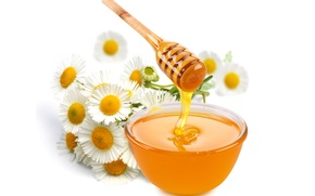 honey, piala, spoon, Daisies, Flowers, white background