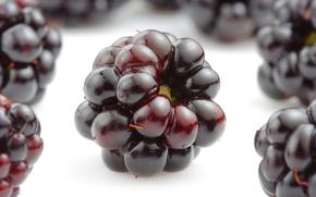 blackberry, Berries, appetizing
