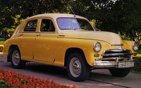 ГАЗ, М-20В, Победа, 1955, GAZ, Pobeda, классика, передок, жетый, цветы, фон, автомобили, машины, авто