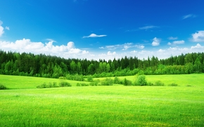 nature, field, grass, Green, lime, forest, Trees, sky, clouds