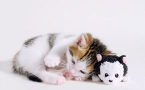kitten, toy, is