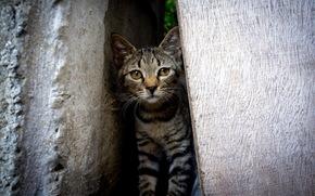 cat, gap, background