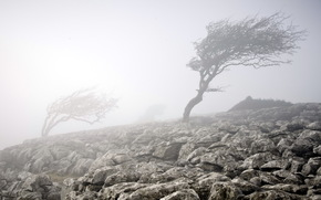 туман, дерево, камни, природа