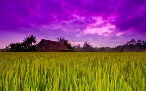 фиолет, дом, пшено, природа