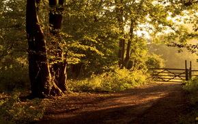 дорога, лес, забор, пейзаж