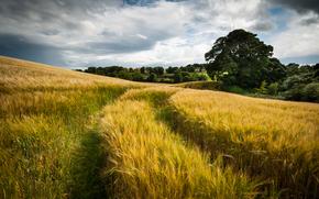 природа, небо, облака, поле, пшеница, след, лето