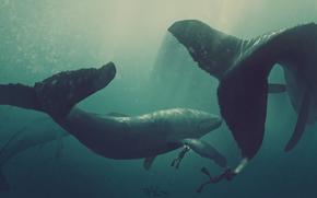 disegno, piano-tavolo, grafica, balena, Gigante, Balene, tuffatore, acqua, oceano, profondit, mondo, sott'acqua, autore