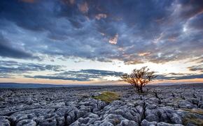 puesta del sol, campo, piedras, rbol, paisaje