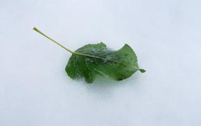 paesaggi, natura, neve, inverno, elenco, verde, brina, freddo