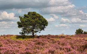 领域, 树, 景观