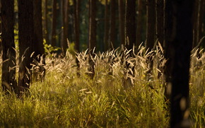 лес, трава, природа, лето