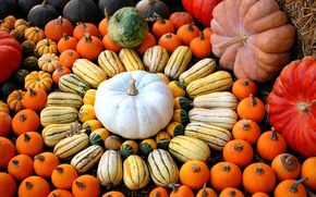 pumpkin, vegetables, TYPES, form, diversity