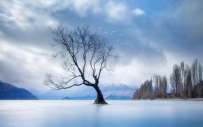 Горы, дерево, озеро, лед, деревья