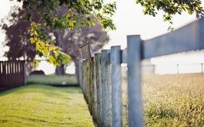 recinto, estate, erba, Macro