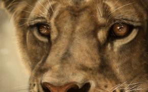 Art, lion, lioness, cat, wild, predator, snout, macro, mustache