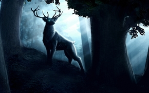 Art, Deer, Siberian stag, Horn, forest, night, dark, Trees, hill, moonlight, eyes, fantasy