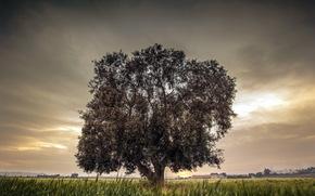 campo, albero, natura, paesaggio