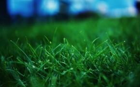 hierba, makrosemka