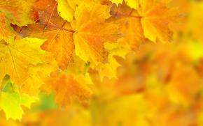 листья, осень, боке