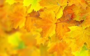 осень, листья, боке