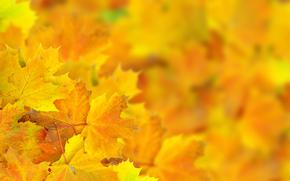листья, макро, боке, осень