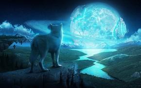 芸術, 夜, 岩, オオカミ, 川, スター, 惑星, リング